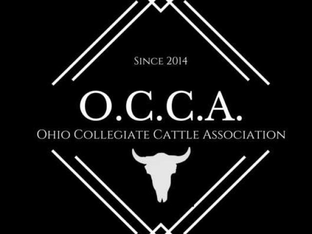 The Ohio Collegiate Cattle Association Logo